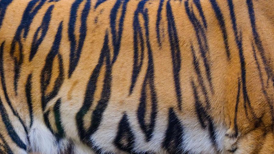 Full frame shot of a cat