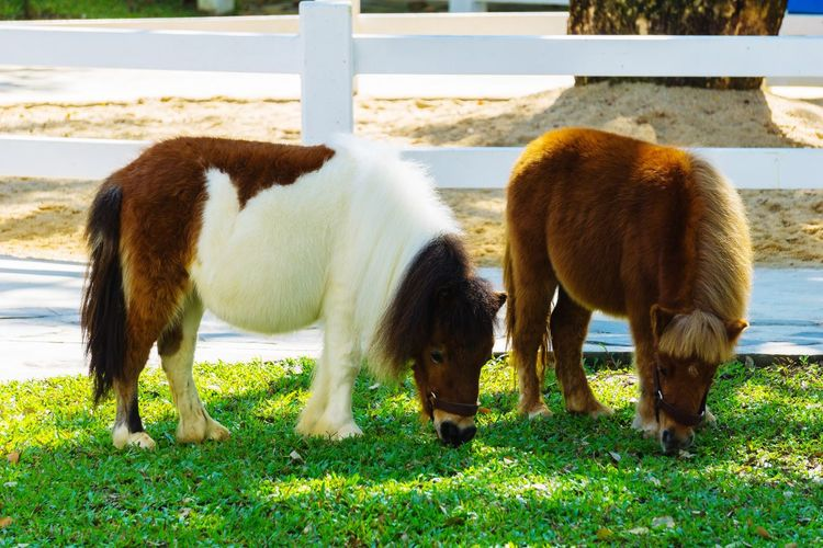 Mammal Animal Themes Day No People Animals In The Wild Animal Wildlife Pets Animal Warf HorseOutdoors Domestic Animals Nature Animals In The Wild Dwarf Horse Lovely Lovephotography  Nature Close-up