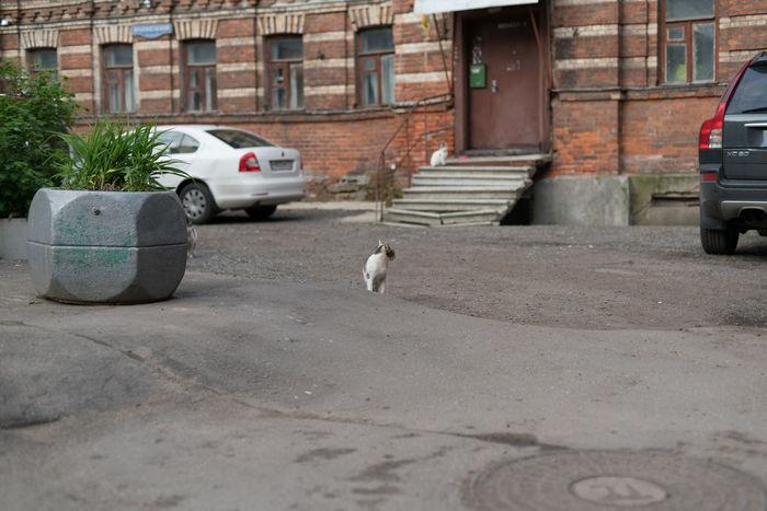 Cat Cat Lovers Cats Cats Of EyeEm Catsofinstagram Cat♡ Stray Cat