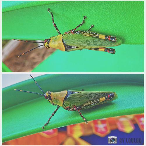 Little lifeNature On Your Doorstep Bugslife Bugs Raimbow EyeEm Nature Lover Africa IvoryCoast TeamIvoryCoast Cotedivoire First Eyeem Photo