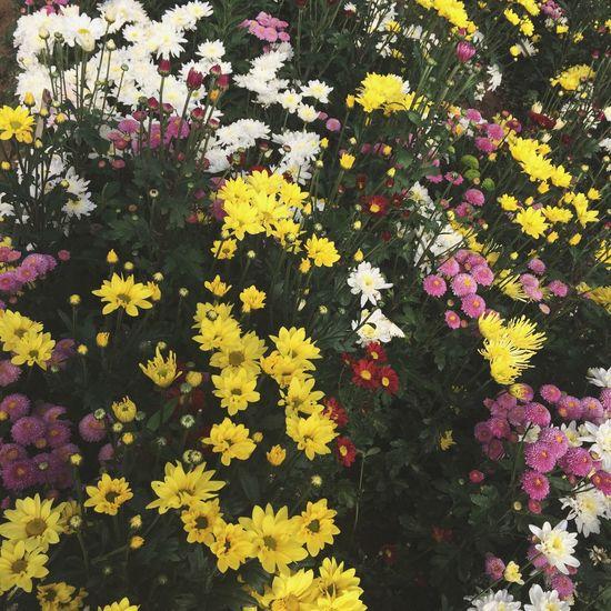 🌸💐🌺🌻🌼🌷🌹 Environment Plants Photography Philippines Benguet Latrinidad Baguio Baguiocity WhenInBaguio Flowers