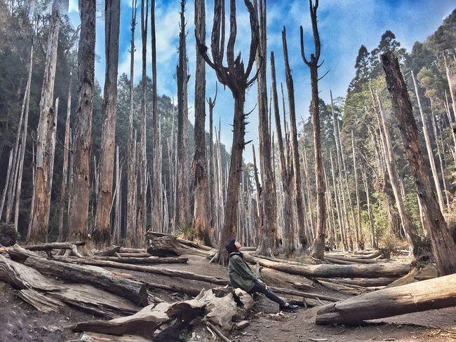 台灣 南投 忘憂森林 Taiwan Nantou Forget Forest Love Like Tree Phtography EyeEm Best Shots