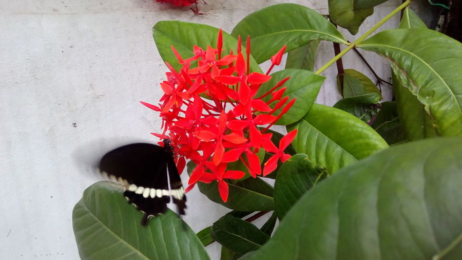 Watch the video on my instagram page madhuri_nomula Flower Leaf Freshness Fragility Plant Close-up Growth Petal Beauty In Nature Flower Head Nature Botany Green Color Blossom Springtime Plant Life Vibrant Color Growing In Bloom Butterfly Butterfly On A Flower Bunch Of Flowers Red Flowers Fluttery Butterfly Glitch