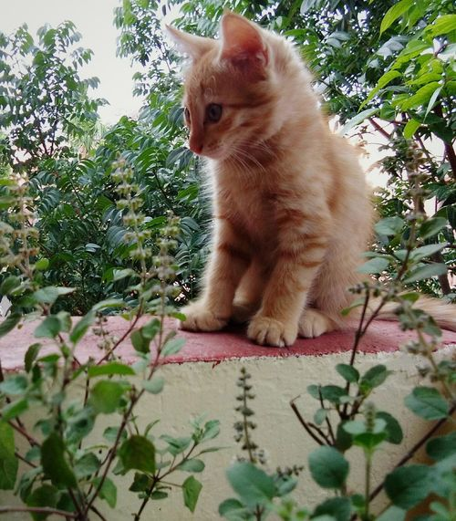 Petstagram Plant Day Nature Greens Cats 🐱 Pets No People