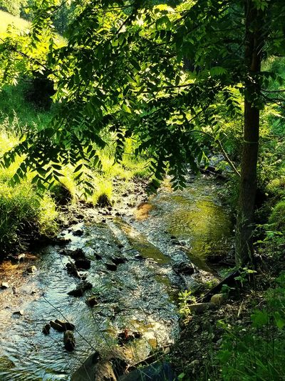 Creek Nature Water Beauty In Nature Tree Sunlight Outdoors