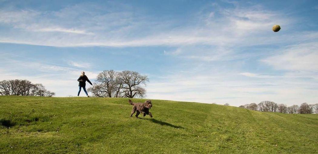 Cockapoo Outdoors Dog Dog Chasing Ball Dog Running Dog Photography