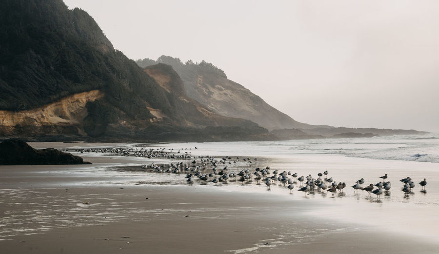 Seagulls Seagulls And Sea Oregon Oregon Coast Ocean Pacific Northwest  Beach Water Waterfront Sky Beauty In Nature Mountain Sea Land Nature Scenics - Nature Clear Sky Rock Outdoors No People Tranquil Scene Sand Tranquility Day Idyllic Environment