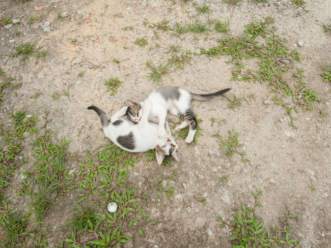 Animal Themes Catfight Cats Day Domestic Animals High Angle View Jack Russell Terrier Laying Out Mammal Nature No People Outdoors Pets Two Cats Hugging Two Cats On The Floor Yawning