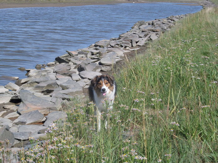 One Animal Dog No People In Fairbourne Dog Best Friends Happy Dog On The River Bank