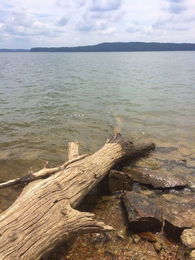 Moores Creek at Monroe Lake Water Nature Sky Cloud - Sky Tranquility Scenics Beauty In Nature Tranquil Scene Day No People Wood - Material Horizon Over Water Dead Tree Beach Tree Close-up Lake Lakeshore Fallen Tree Rocks Waterfront Lakeside Monroe Lake Lake Monroe Lake Monroe, Indiana