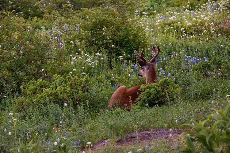 View of deer on grassy field