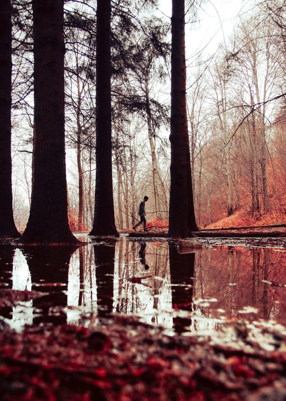Man Walking By Trees And Lake
