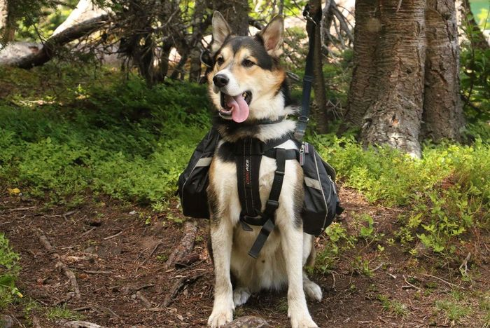 Adventure Club Dog❤ Hikingadventures Hanging Out Check This Out Hello World Nature Photography Enjoying Life Rescuedog Rescue Husky Shepard