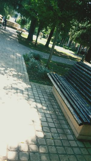 Tree Day Sunlight No People Outdoors Shadow Nature Sky Kraljev Park Podgorica Crna Gora Montenegro By.Dalila 💝