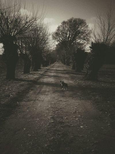 Animal Dog Waiting B&w Black And White France My Best Photo 2015 EyeEm Best Shots EyeEm Eyem Gallery My Photo