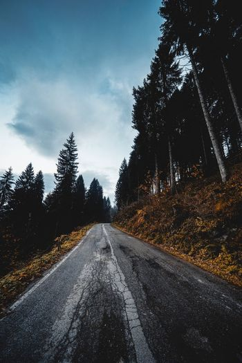Tree Road Plant Transportation Sky Direction The Way Forward Cloud - Sky Marking Asphalt vanishing point Symbol Tranquility Tranquil Scene Diminishing Perspective Beauty In Nature Nature No People Road Marking Outdoors