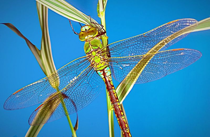 The iridescent colours and delicate wing structure of a dragonfly. Insect Dragonfly Animal Themes Animals In The Wild Nature Close-up Beauty In Nature Entomology Portrait Wildlife Beautiful Nature Animal Wildlife EyeEm EyeEm Gallery EyeEm Best Edits EyeEm Masterclass EyeEm Best Shots EyeEmBestPics Photo Photography Photographer Green Color Green Beautiful Detail