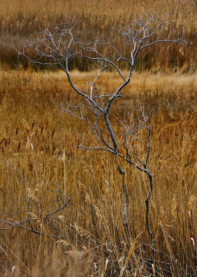 Close-up of bare tree on field