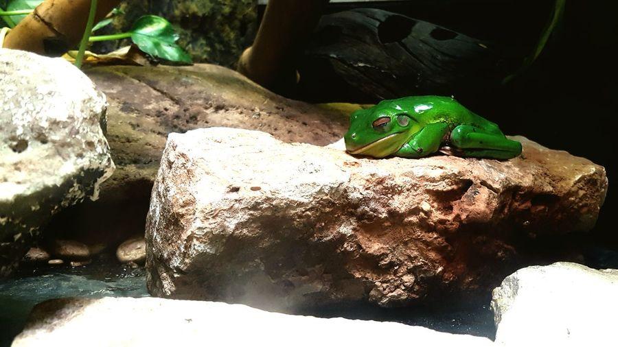 Reptile One Animal Animals In The Wild Lizard Animal Themes Animal Wildlife Frog Bioparco