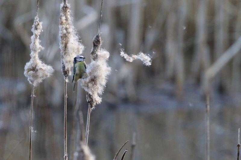 Close-up of bird plant