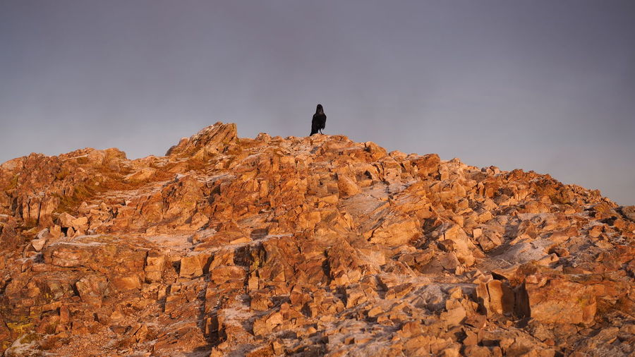 Low angle view of bird perching on rock