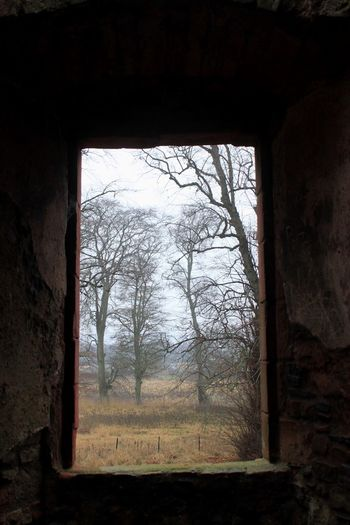 Secret Spaces Tree Window Bare Tree Day No People Indoors  Built Structure Architecture Branch Grass Nature Sky The Secret Spaces The Secret Spaces