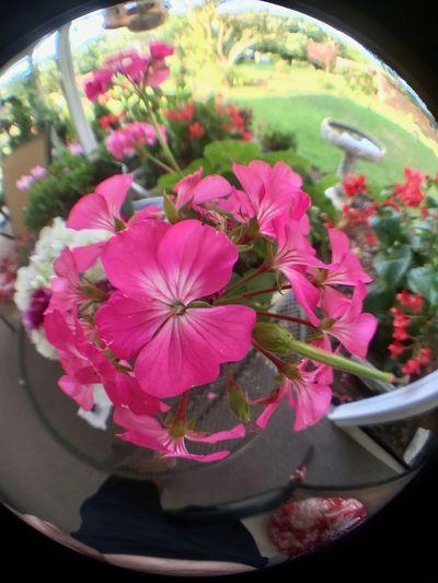 Fisheye Flowers,Plants & Garden