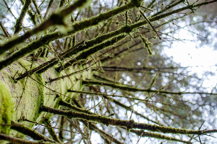 Tree Plant Branch Low Angle View No People Growth Beauty In Nature Nature Day Green Color Tranquility Close-up Outdoors Focus On Foreground Forest Selective Focus Leaf Sky Plant Part Land Coniferous Tree EyeEmNewHere