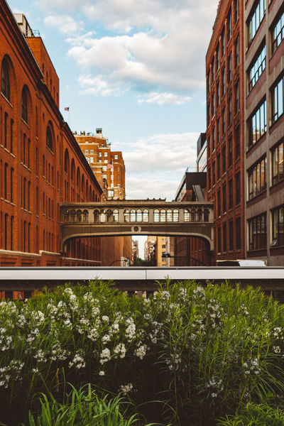 Bridge Sky Blue Sky Clouds Architecture White Flower New York City New York Manhattan Plants Outdoors Garden Flowers Flower Nature Plant Growing Greenery Color Colorful Blooming Day Urban Landscape Downtown Summer