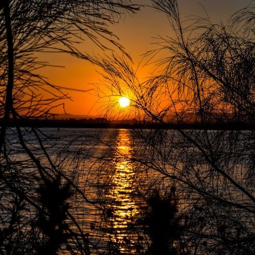 Sunshine! Good morning! <3 EyeEm Best Shots - Sunsets + Sunrise EyeEm Best Shots - No Edit EyeEm Best Shots - Landscape EyeEm Best Shots