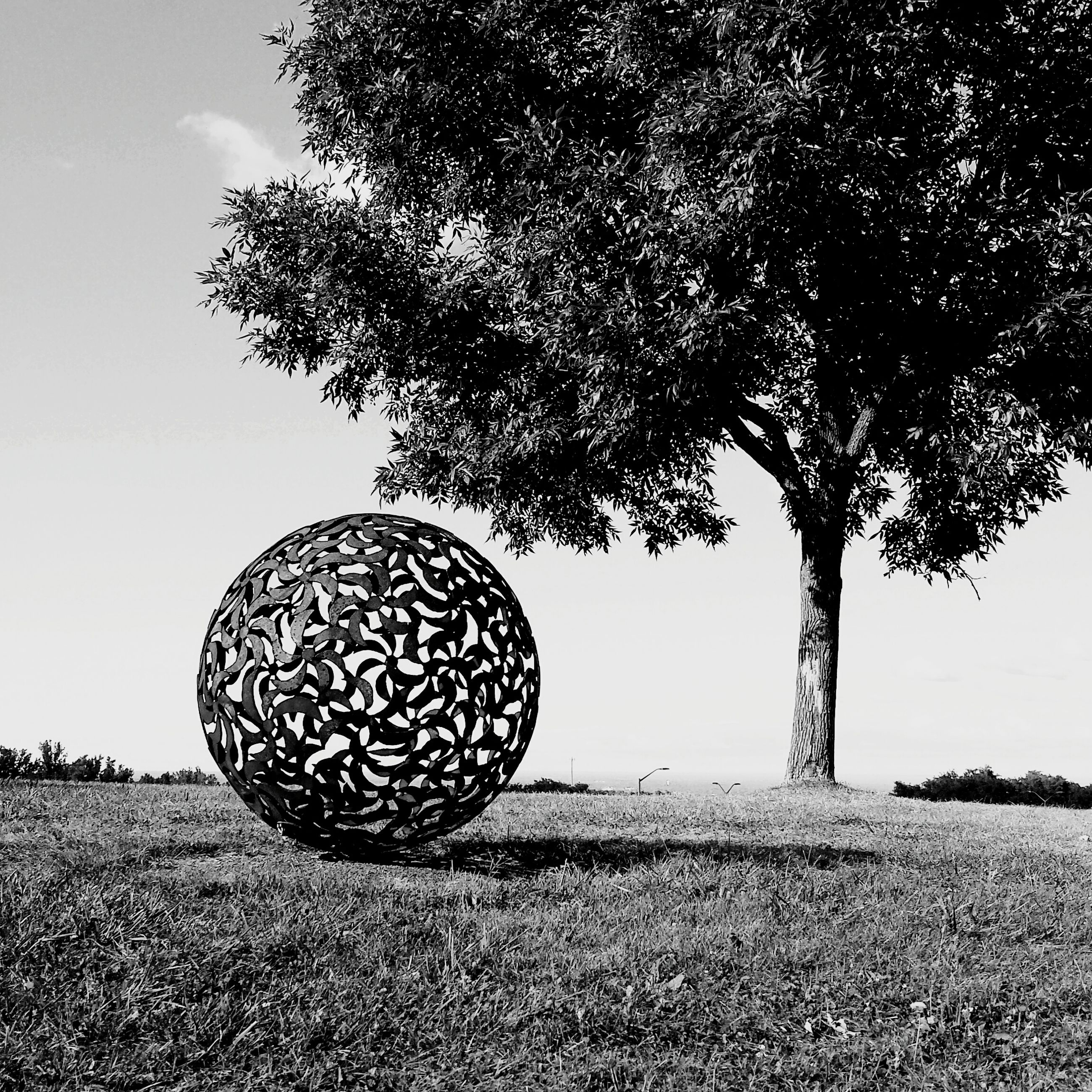 tree, field, tranquility, growth, landscape, tranquil scene, nature, grass, sky, sphere, clear sky, no people, park - man made space, beauty in nature, sunlight, outdoors, day, circle, shadow, grassy
