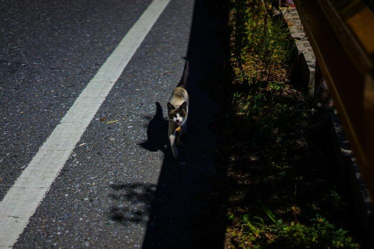 Wuling Mountains tour Shadow Shadows & Light Shadows Cat Climb Mountain View Nantou,Taiwan Taiwan Taroko Taroko National Park Mountain Mountain Peak Mountain Range Mountains Puli Steep Sunset Taroko Gorge Wuling Mountain Road Domestic Animals Pets One Animal