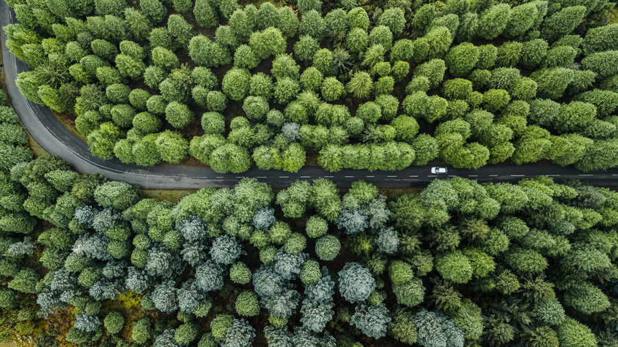 Top view of road through the green autumn forest. Drone  Drone Photography DJI Mavic Pro DJI X Eyeem Madeira Island Pine Woodland Directly Above Top View Above Autumn Road No People Travel Destinations Nature Rural Scene Backgrounds Day Abundance Green Color Fir Tree Car Aerial View Aerial Shot Outdoors Tropical Climate