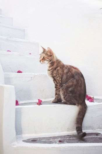 Cat looking away while sitting on wall