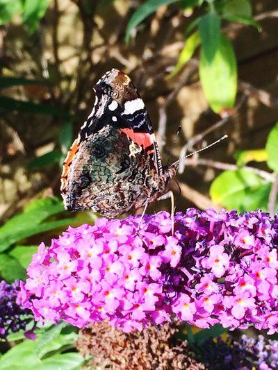 Beautiful Sun Popular Photos OpenEdit Flowers Garden Sun ☀ Butterfly