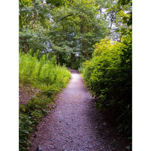 Footpath amidst trees and plants