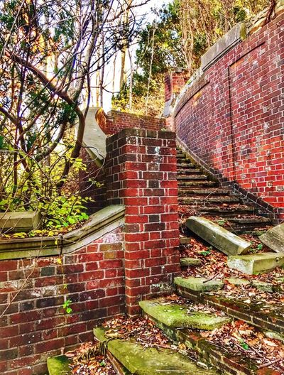 MarshallFieldEstate-CrumblingStaircase Architecture Built Structure Building Exterior No People Tree Brick Wall Outdoors Growth Day Low Angle View Green Color Nature Long Island, Ny Caumsett State Park Gold Coast Mansions Great Gatsby Era Staircase Stairs
