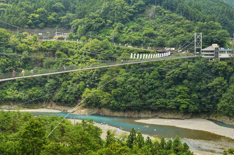 Tree Water Lush - Description Rural Scene Forest Lush Foliage River Plant Green Color