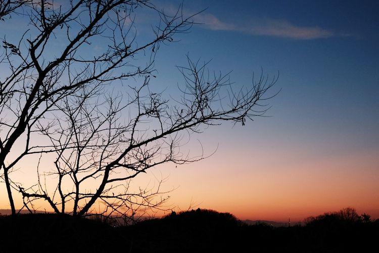 Tree Sunset Bare Tree Branch Silhouette Mountain Dusk Blue Sky Landscape