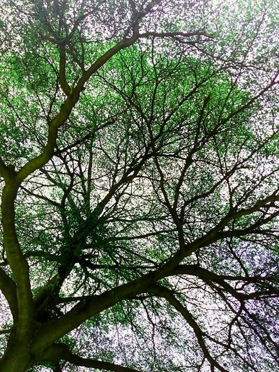Tree Tree Photography Tree_collection  Tree Colors Colorful Tree Creative Color On Leaves Creative Color Nature Photography Nature Tree View Low Angle Shot Low Angle ใน Bangkok, Thailand