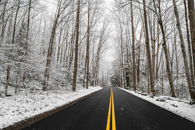 Surface level of road along bare trees in winter