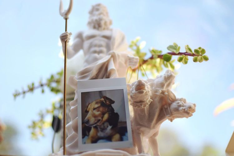 My own Cerberus. Freshness Greek Mythology Animal Themes Polaroid Still Life Dog Flowering Plant Flower Plant Sky Art And Craft Nature Human Representation Sculpture No People Low Angle View Spirituality Religion Belief Architecture The Still Life Photographer - 2018 EyeEm Awards