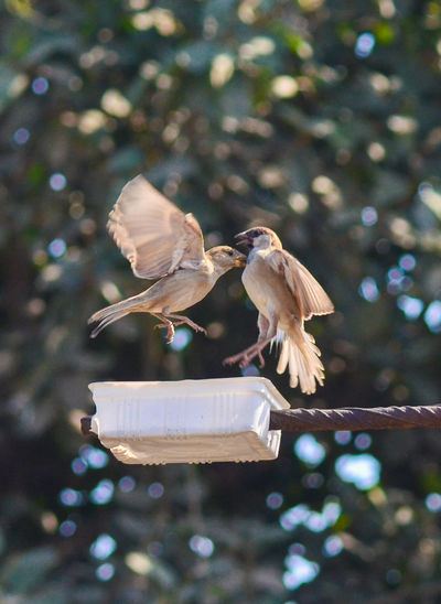 Sparrows flying over feeder outdoors