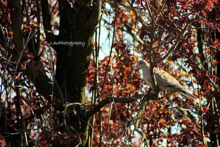 Bird Duif Garden Summer Tree
