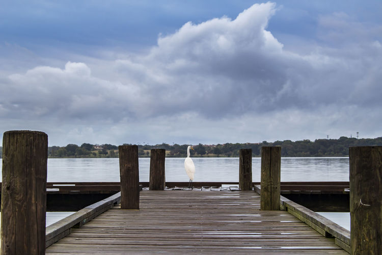 Crane waiting for an early morning fish breakfast at the dock overlooking White Rock Lake in Dallas. Beauty In Nature Bird Cloud - Sky Clouds Crazy Day Dock Jetty Lake Nature No People Outdoors Pier Scenics Sea Sky Tranquility Water White Bird Wood - Material Wood Paneling