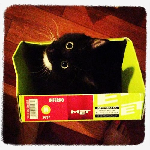 My Box!