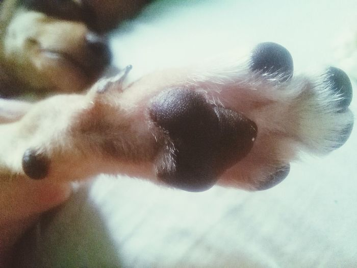 I Love My Dog Hi Five Chimuelo Pet Photography  Sweet Moments