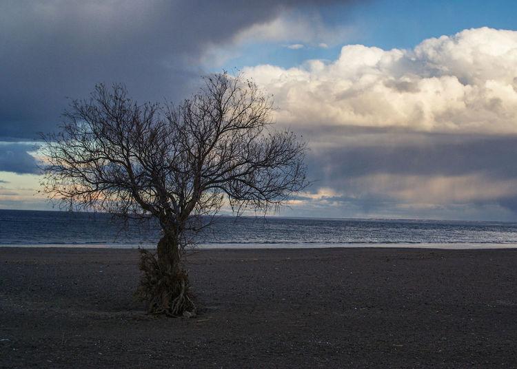 Playa El