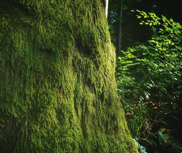 TyrawaSolna Podkarpacie Magical Trees Mystery Forrest Forrestmagic ın The Forrest Check This Out