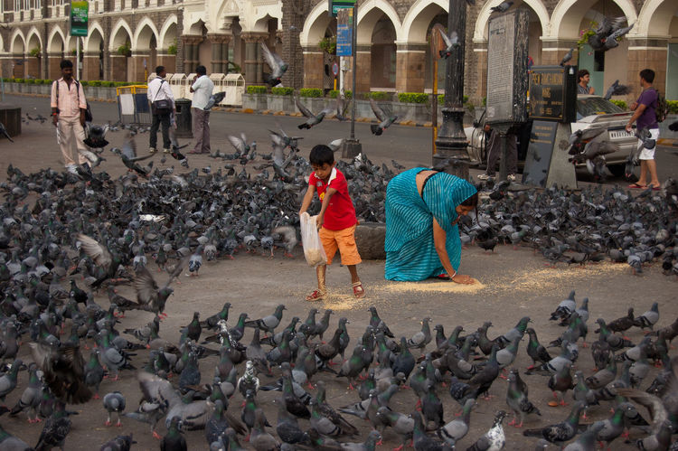 B Casual Clothing Childhood City Colour Day Doves Feeding Birds Incredible India Tour India Tourism Innocence Music Outdoors Togetherness